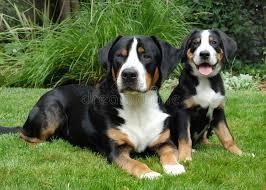 convivenza cani