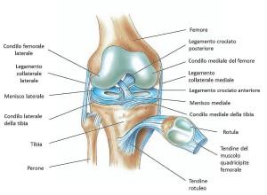 sxcheletro